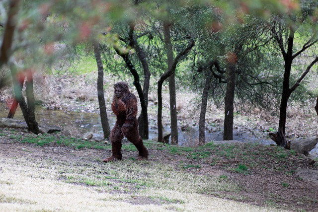 Texas Bigfoot