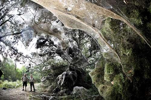 spider web trees pakistan strange unexplained mysteries. Black Bedroom Furniture Sets. Home Design Ideas