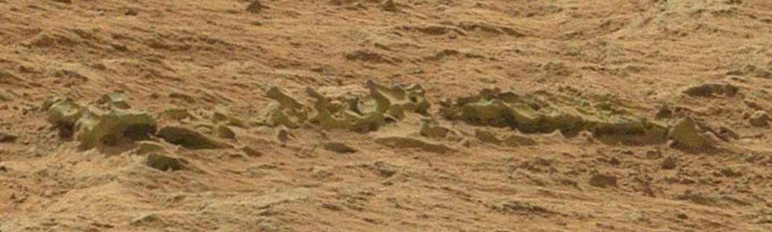 nasa-Curiosity-fossilized-Spine-edited-1