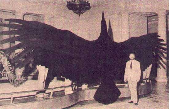 The Mothman was sited a number of times in the late 60's