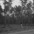 Alien captured on film in 1930's Alaska