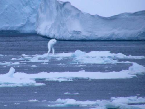 Alien Spotted in Arctic