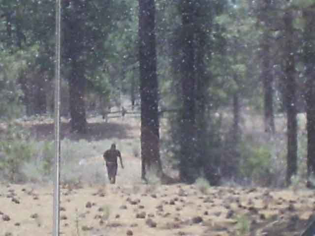 Real Bigfoot sightings?