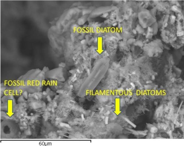 meteorite_diatom_fossil