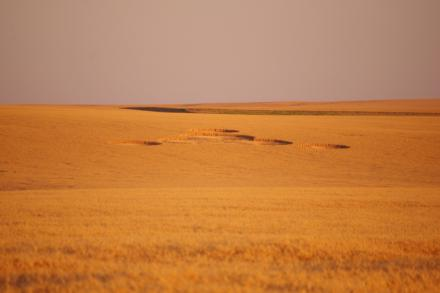 'Mysterious' crop circles near Wilbur,