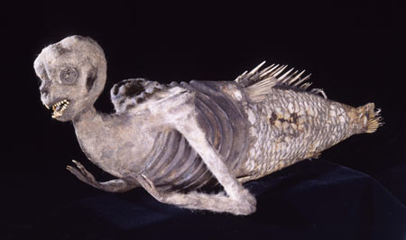Feejee Mermaid – Hoax?