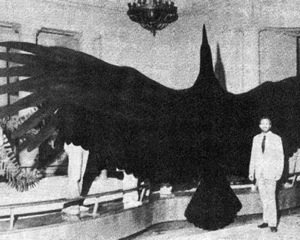 The largest bird to fly, Argentavis magnificens,