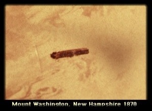 Earliest UFO Photo' Taken From Summit of Mount Washington, New Hampshire