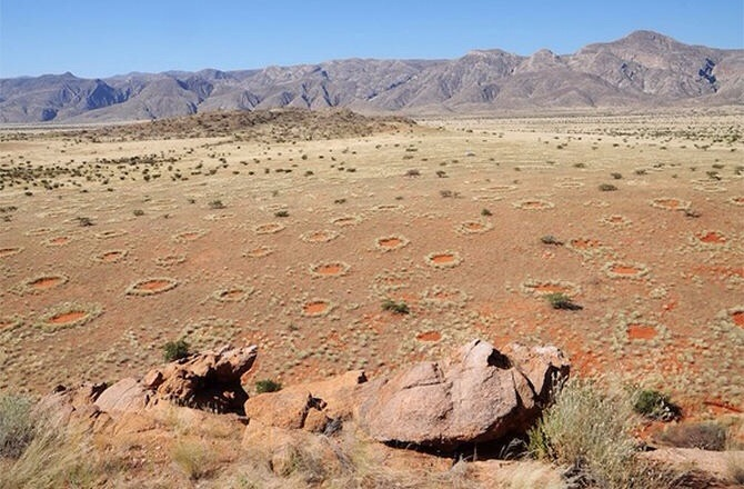 Mysterious Fairy Circles Not Caused by Termites !