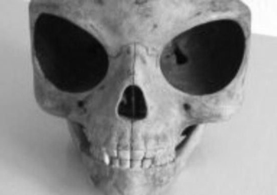Does the Sealand skull prove aliens visited earth?