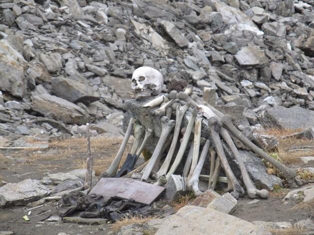 Bones, bones, and more bones....
