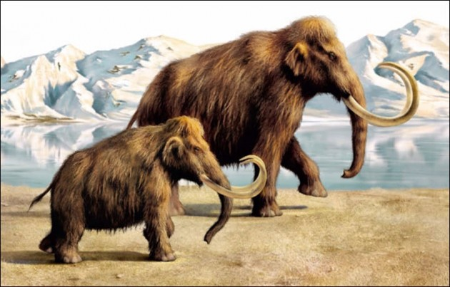 Mammoth could be brought back to life in Siberian reserve!