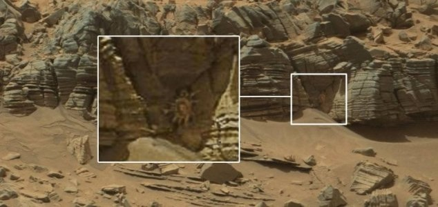 Strange alien like animal found on Mars!