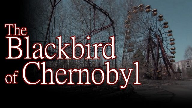 The strange story of the Black Bird of Chernobyl